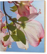 Blue Sky Floral Art Pink Dogwood Tree Flowers Wood Print