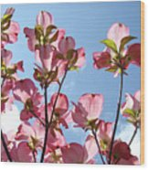 Blue Sky Landscape White Clouds Art Prints Pink Dogwood Flowers Baslee Troutman Wood Print