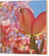 Blue Sky Pink Azalea Dogwood Flowers 4 Landscape Nature Artwork Wood Print