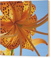 Blue Sky Sunshine Tiger Lily Flowers Giclee Prints Baslee Troutman Wood Print