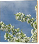Blue Sky White Clouds Landscape Art White Tree Blossoms Spring Wood Print