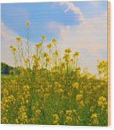 Blue Sky Yellow Flowers Wood Print