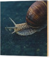 Blue Snail Wood Print