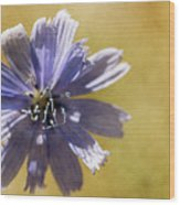 Blue Star #2 Wood Print
