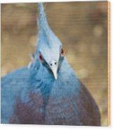 Blue Stare Wood Print
