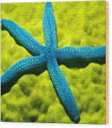 Blue Starfish On Poritirs Wood Print