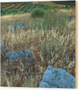 blue stones amongst the olive groves near Iznajar Andalucia Spain Wood Print