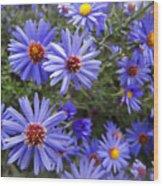 Blue Street Daisies Wood Print