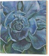 Blue Succulent Wood Print