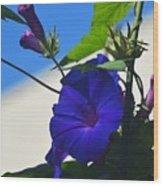 Blue Summer Flower Wood Print