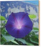 Blue Teefull Wood Print