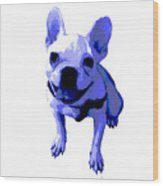 Blue Terrier Wood Print