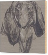 Blue Tick Coonhound Wood Print