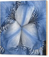Blue Tiger Iris Wood Print
