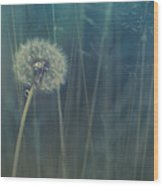 Blue Tinted Wood Print by Priska Wettstein