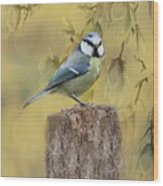 Blue Tit Bird II Wood Print