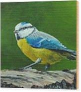 Blue Tit Bird Wood Print