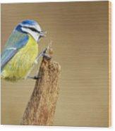 Blue Tit Perched Wood Print