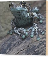 Blue Tree Frog Wood Print