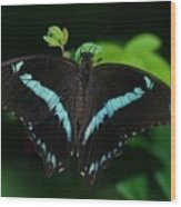 Blue Triangle Butterfly Wood Print