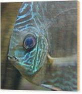 Blue Tropical Fish Wood Print