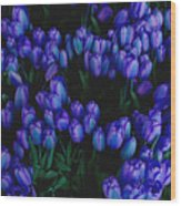 Blue Tulips Wood Print