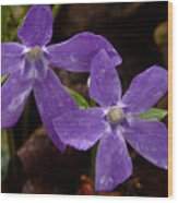 Blue Violet Couple Wood Print