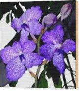 Blue Violet Orchids Wood Print