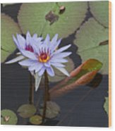 Blue Water Lilies Of Belize Wood Print