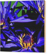 Blue Water Lily Iv Wood Print
