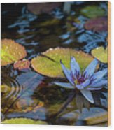 Blue Water Lily Pond Wood Print