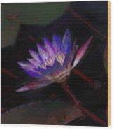 Blue Waterlily Wood Print