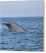 Blue Whale Tail Flop Wood Print