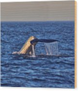 Blue Whales Tail Wood Print