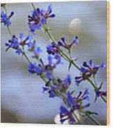 Blue Wildflowers Over Rimrock Lake Wood Print