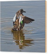 Blue Winged Teal 4 Wood Print