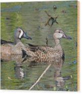 Male And Female Blue-winged Teal  Wood Print