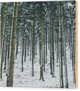 Blue Winter Forest Wood Print