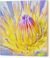 Blue Yellow Lily  Wood Print