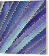 Blue Yucca Wood Print