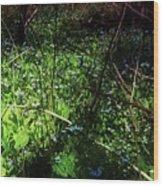 Bluebell 24 Wood Print