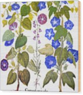 Bluebell And Morning Glory Wood Print