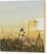 Bluebell In The Sunrise Wood Print