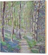 Bluebell Walk At Llanilar Aberystwyth Wood Print