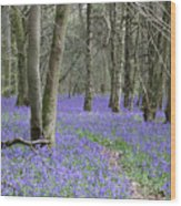 Bluebell Wood Effingham Surrey Uk Wood Print