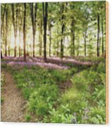 Bluebell Woods With Birds Flocking  Wood Print