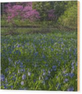 Bluebells And Redbuds Wood Print