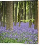 Bluebells Wood Print by Jane Rix