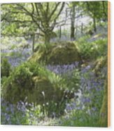Bluebells On Dartmoor Wood Print