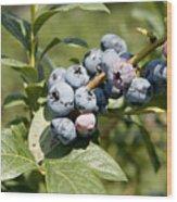 Blueberries On Blueberry Bush Wood Print